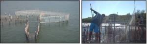 a) Foto do cerco-fixo visto de cima; b) Pescadores retirando o peixe do cerco-fixo.