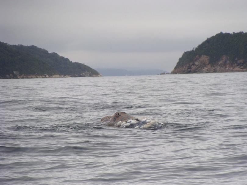 1 - baleia pantano